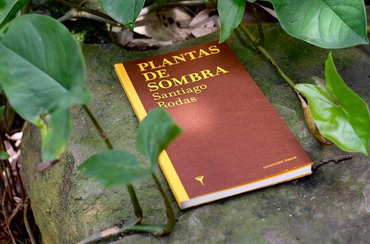 Colección ámbar: nuestra colección dedicada a la poesía